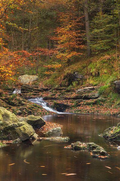 Herfst van Jan Koppelaar