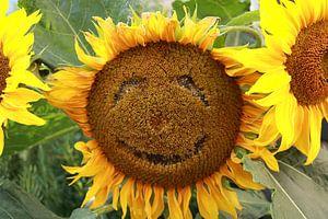 Fröhliche Sonnenblume von Russell Hinckley