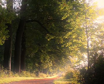 Zondagochtend wandeling door Amelisweerd sur Pieter Heymeijer