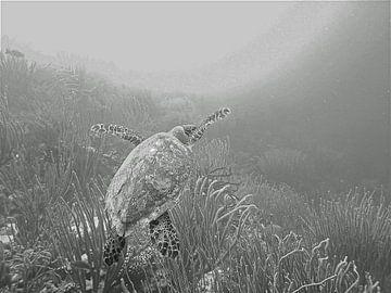Schildpad onderweg naar het licht. von Silvia Weenink