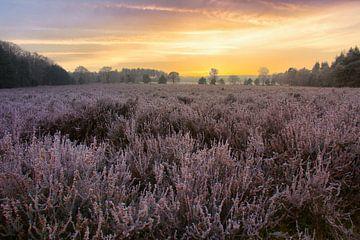 Sonnenaufgang über der Heidelandschaft von Rick van de Kraats