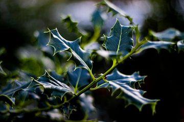 Pointy leafs van Gilles Hermans