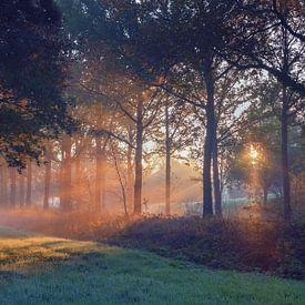 Zonnestralen door de bomen van Landgoed Nienoord Leekk van R Smallenbroek
