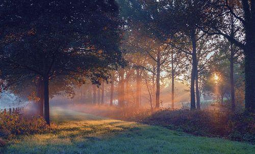 Zonnestralen door de bomen van Landgoed Nienoord Leekk