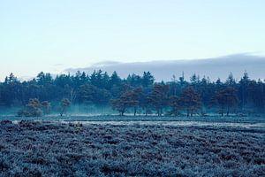 Ginkel Heide im Winter von