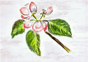 Blüte / Frühjahr - Apfelblüte - Aquarell gemalt von VK (Veit Kessler) von ADLER & Co / Caj Kessler