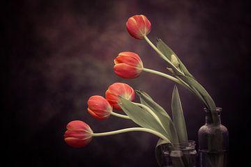 5 Tulips von Marina de Wit