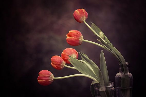 5 Tulips van Marina de Wit