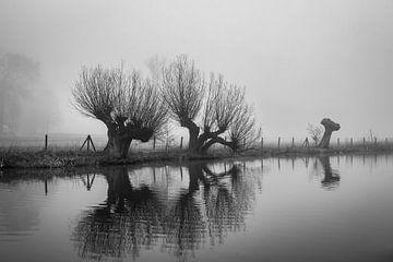 Knotwilgen in de Mist langs de Kromme Rijn, Provincie Utrecht, Nl van Arthur Puls Photography