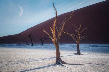 De afscheidende schaduwlijn van Joris Pannemans - Loris Photography