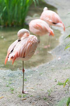 Flamingo van Eric de Kuijper