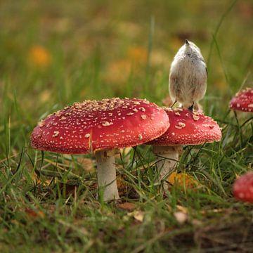 Kleine staartmees op paddenstoelen van Heike Hultsch