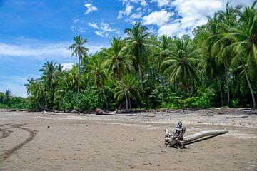 Natuur in Costa Rica van Merijn Loch