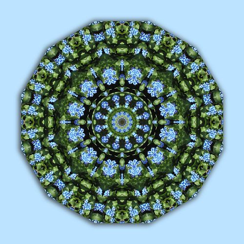 Flower Mandala, Flower Mandala, Forget me nots, Forget-me-nots