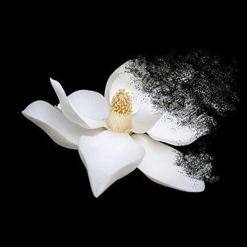 Blumenkunst von Felagrafie .