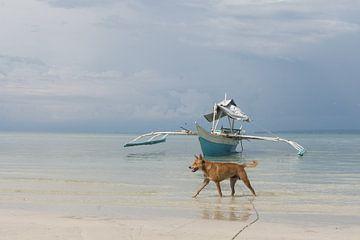Strand Foto met hond en boot van Ubo Pakes
