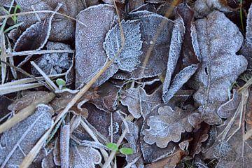 Bevroren bladeren van Nicolette Vermeulen
