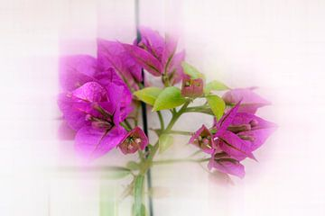 Cubisme floral van Martine Affre Eisenlohr