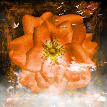 Airy Rose hat es den Vögeln angetan. von Helga Blanke