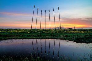 Oerwold De Onlanden tijdens zonsopkomst met reflectie