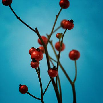 Rote Beeren von Andreas Berheide Photography