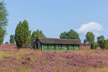 Bienenstand, Wilsede, Naturschutzgebiet Lüneburger Heide, Niedersachsen, Deutschland