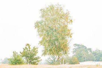 Baum von Hennie Zeij