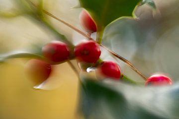 Herbstbeeren von Detty Verbon