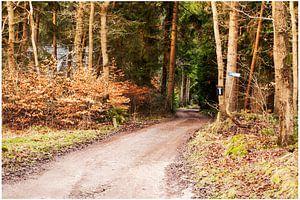 Mooie bossen in Drenthe van Anuska Klaverdijk