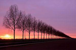 Zonsondergang achter de bomen van Denise van Gerven