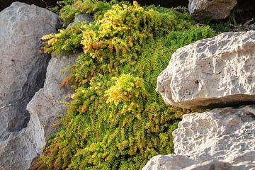 Grün zwischen den Felsen. von Tineke Koen