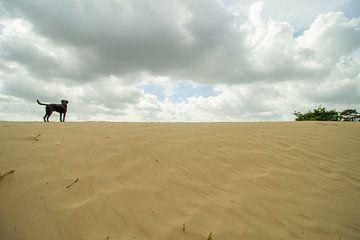 Hond staat boven op een zand duin van Marco Leeggangers