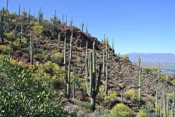 Tonto National Park , Arizona von Bernard van Zwol