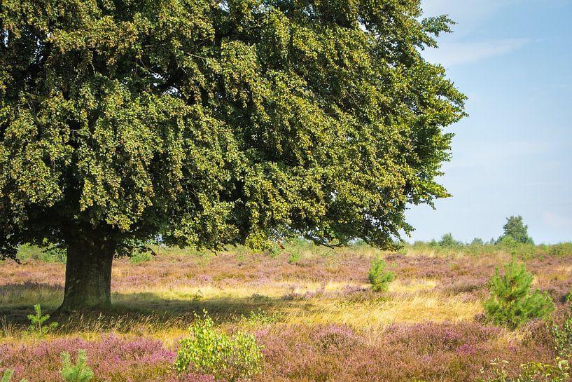 Oude beukenboom van Hilda Weges