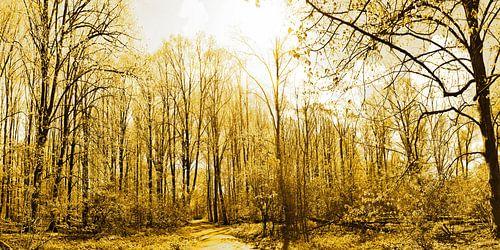 Gouden Amsterdam Bos