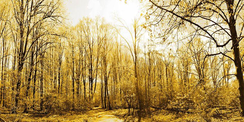 Gouden Amsterdam Bos van Hendrik-Jan Kornelis