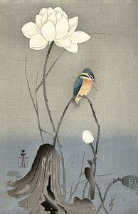 Japanse Ijsvogel in een bewerking van nu
