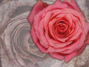 Roos van boven op marmer van Gilbert Gordijn