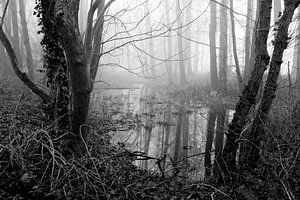 Mist in het bos ZW