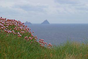 Skellig Island vanaf Kerry's Cliffs bij PortMagee