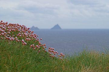 Skellig Island vanaf Kerry's Cliffs bij PortMagee sur
