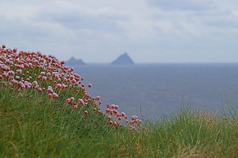 Skellig Island vanaf Kerry's Cliffs bij PortMagee van Elfriede de Jonge Boeree