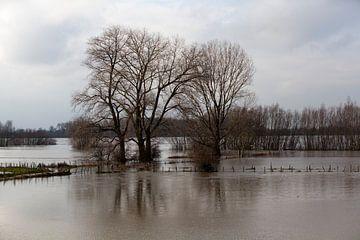 Bomen onder water van Kees van Dun