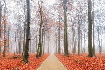 Fietspad door het Edese bos in de herfst van