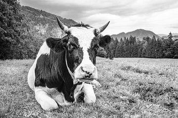 Schwarz-Weiß? Na und! von kuh-bilder.de