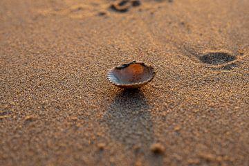 Schelp op het strand van Allerlei foto's