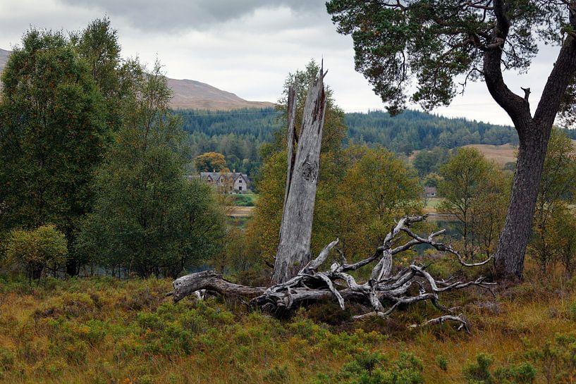 Schots landschap van Ab Wubben