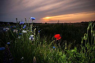 Feldblumen bei Sonnenuntergang auf dem Gebiet von Fotografiecor .nl