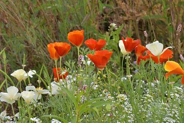 Gekleurd veld wilde bloemen van J..M de Jong-Jansen