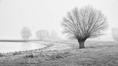 Landschap met mist en bomen in Werkendam